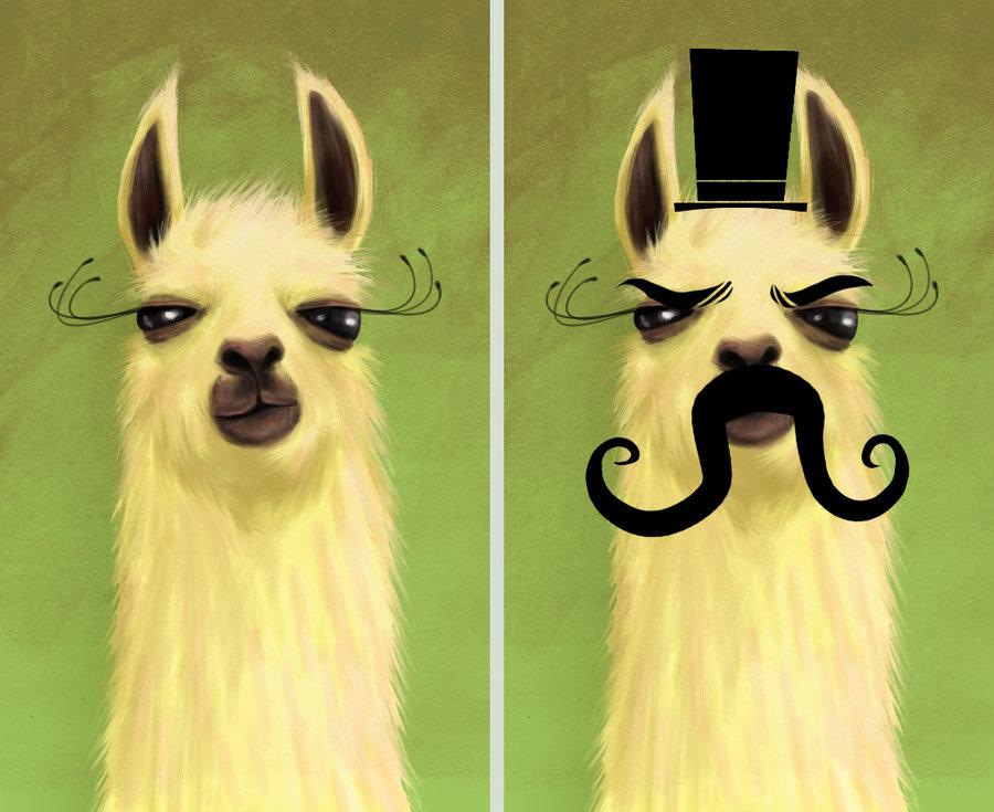 live. love. llamas.
