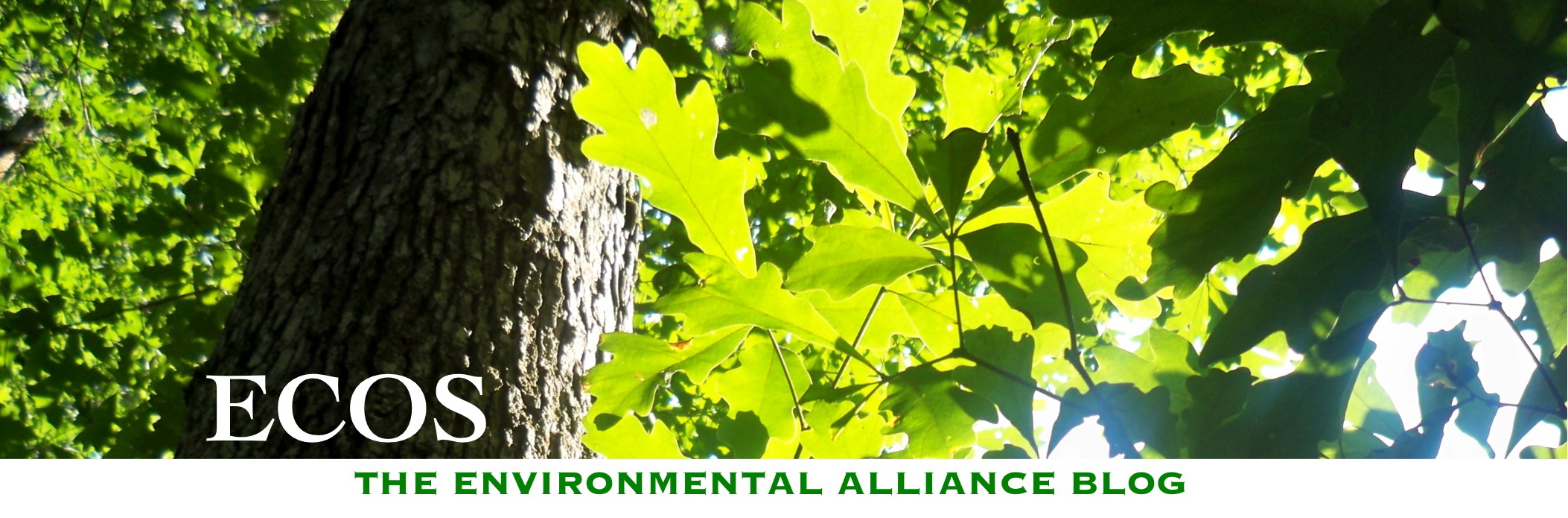 Ecos: The Environmental Alliance Blog