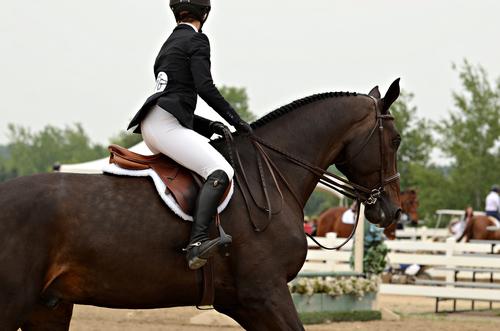 Equestrian Confessions Horse Lessons Tumblr