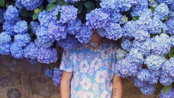 Výsledek obrázku pro hydrangea tumblr