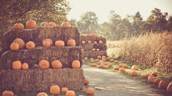 Image result for pumpkin patch tumblr
