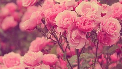 The Blush Pink Tumblr