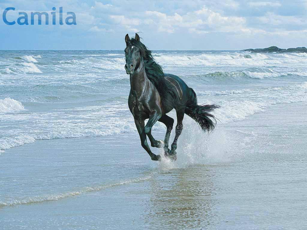 Wonderful Wallpaper Horse Wolf - tumblr_static_horse  HD_443130.jpg
