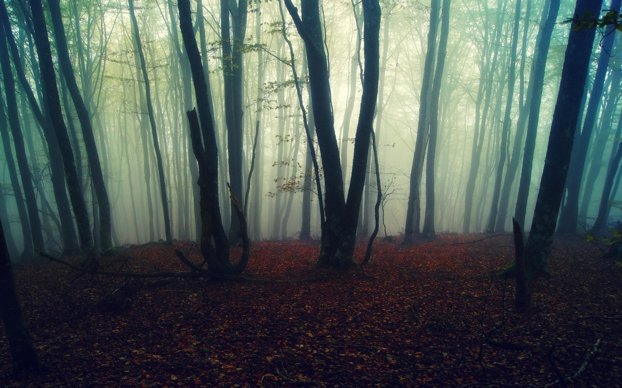 Must see Wallpaper Horse Forest - tumblr_static_autumn-free-wallpaper-foggy-forest_2560x1600_93147  Picture_72457.jpg