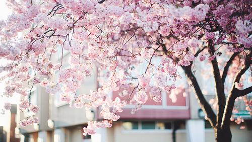 Similiar Tumblr Aesthetics Blossoms Keywords