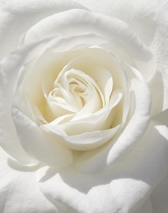 white rose thorns tumblr