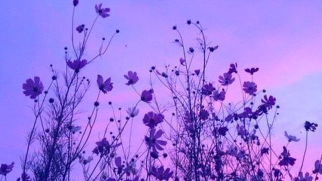 Purple Quotes Pleasing Purple Quote  Tumblr