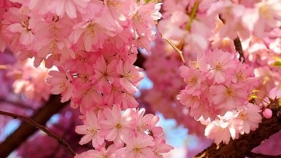 Pink flowers aesthetic tumblr pink flowers mightylinksfo