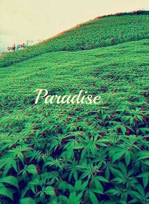 dope tumblr weed wallpapers - photo #23
