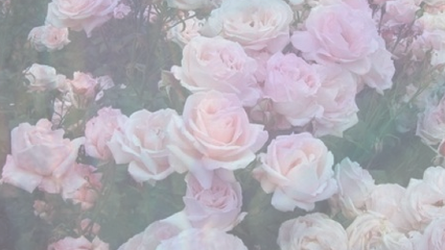 Pale pink flower tumblr aesthetically pale mightylinksfo