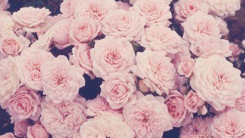Rose peony tumblr skin fair as milk mightylinksfo