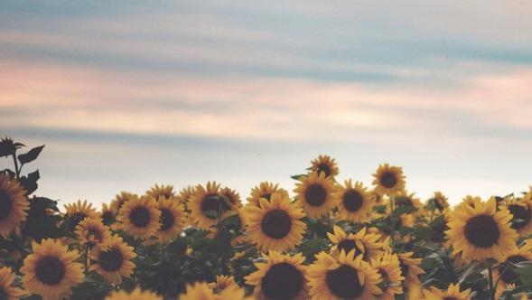 Dean Winchester Is A Pretty Sunflower