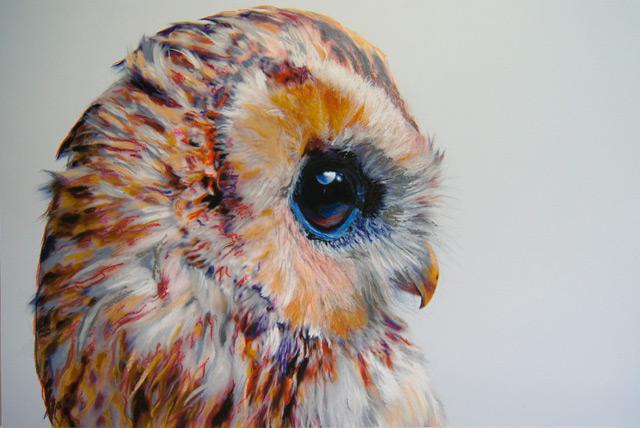 Dragounet en plumes