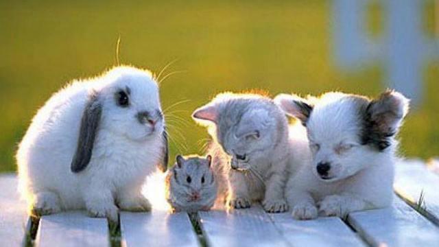 Tumblr baby animals