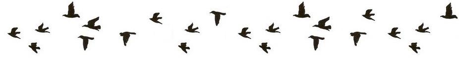 Wez Bird.