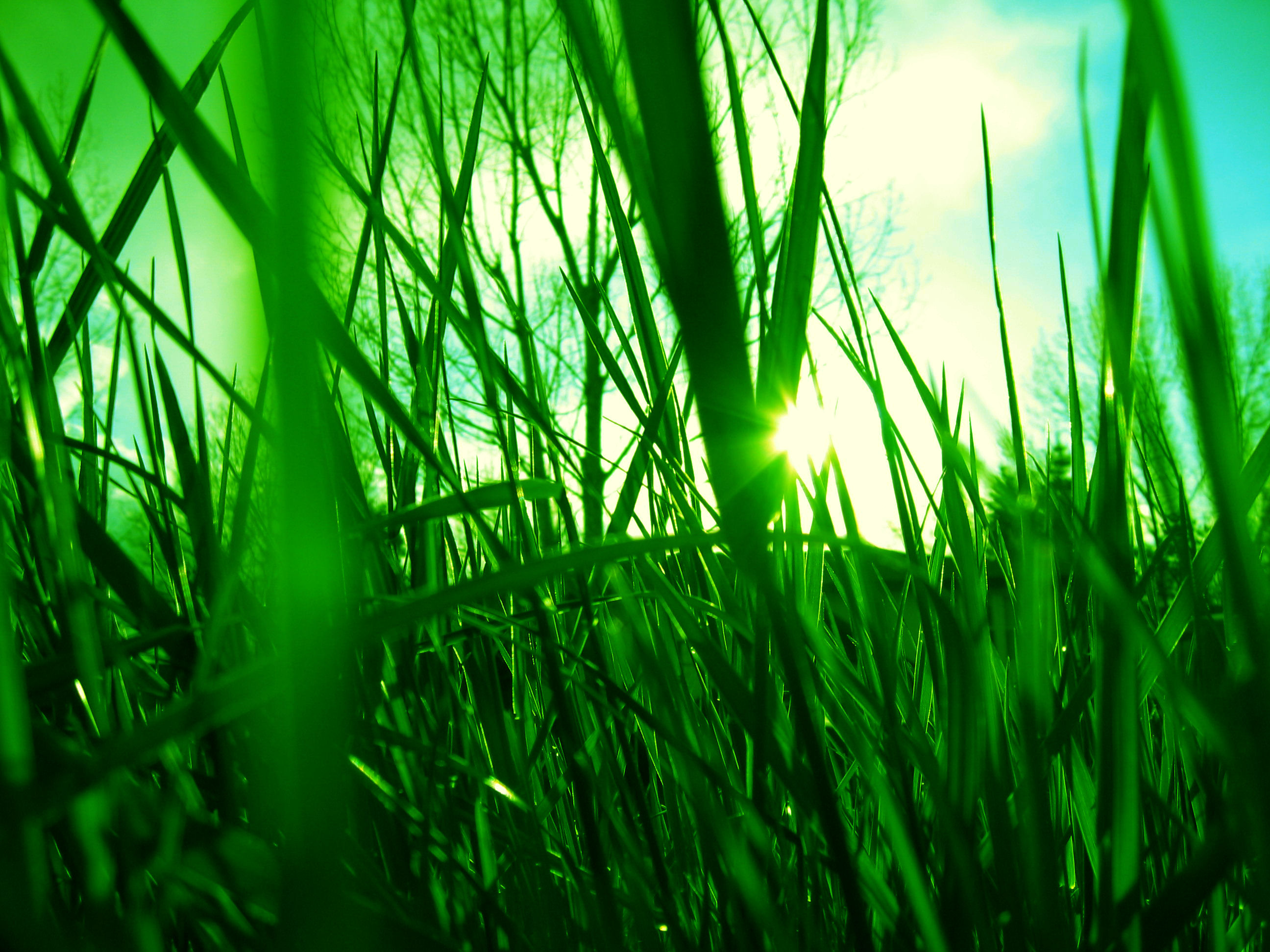 Grass Tumblr Images - Reverse Search