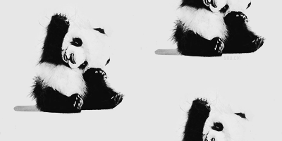 Cute panda tumblr themes - photo#3