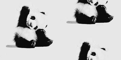 Cute panda tumblr themes - photo#3