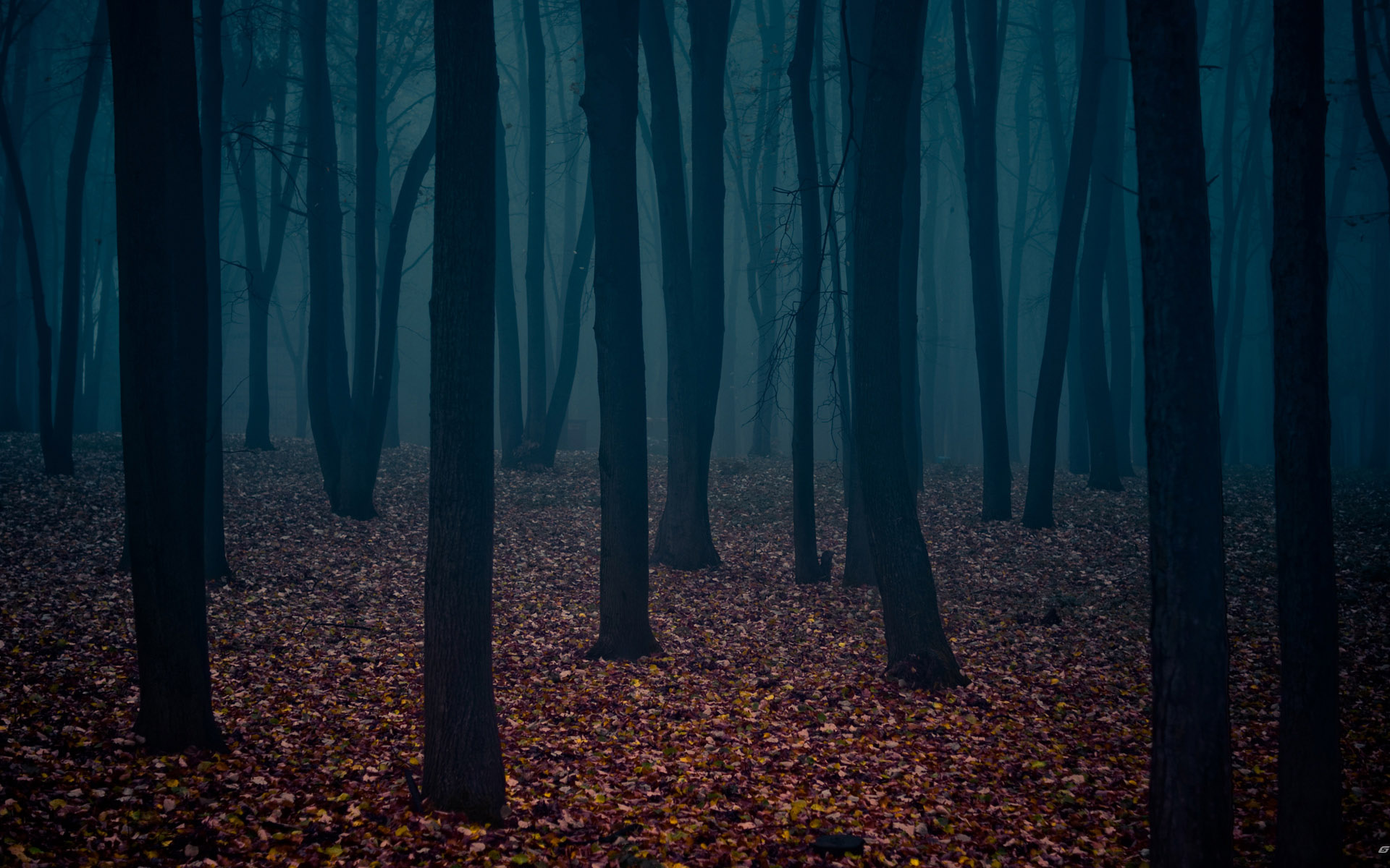 fall woods backgrounds wallpapers - photo #36