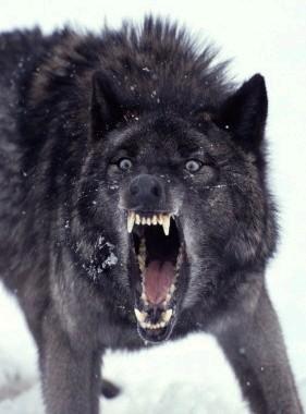 Wilkolak