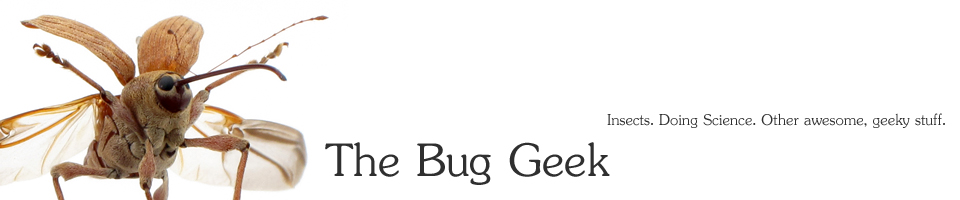 The Bug Geek