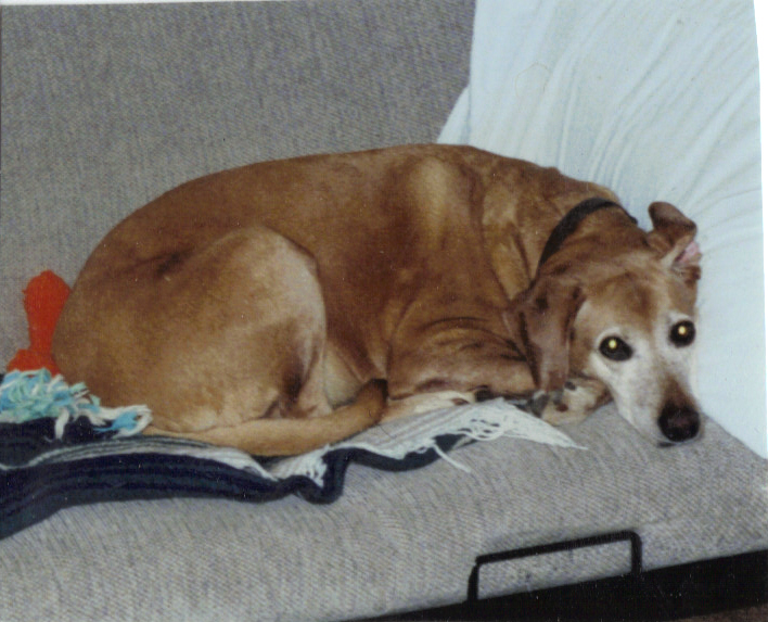 Emma (April 1994 - October 25, 2009)