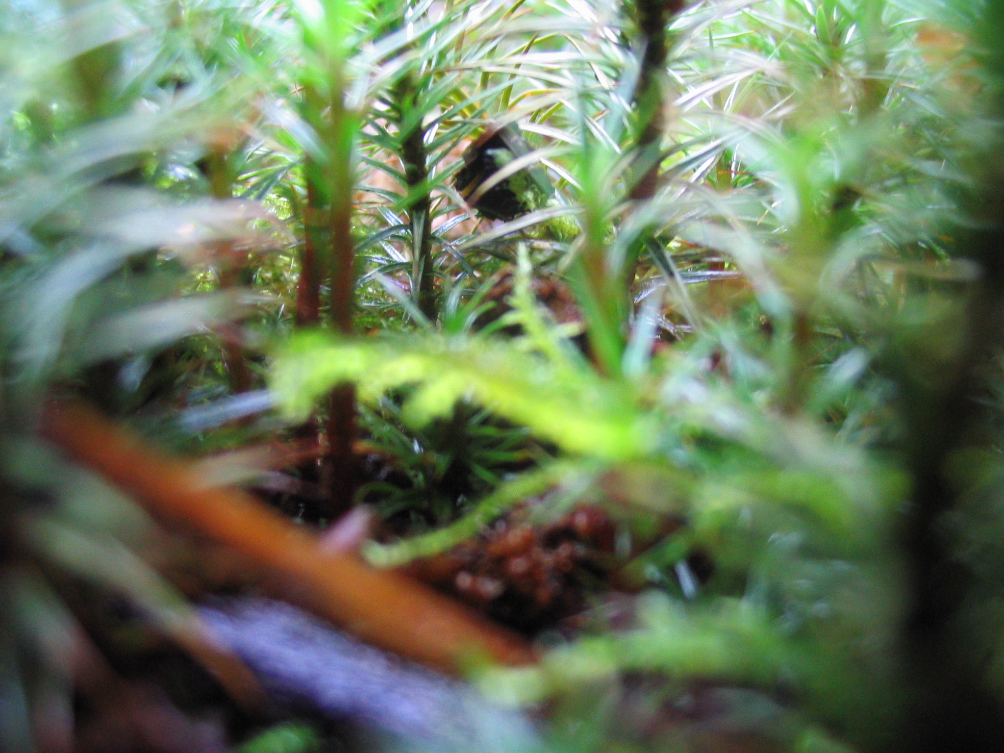 In the forest of tiny trees...