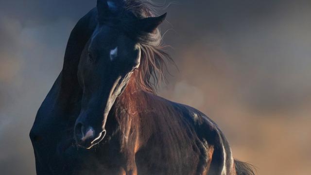 Horse tumblr pictures