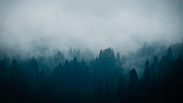 Tribu des Forêts