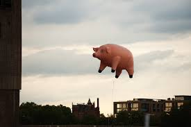 The flying pink pig