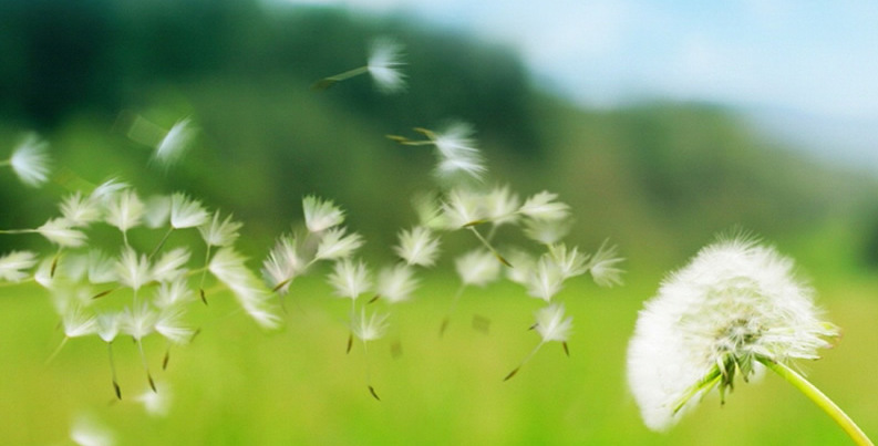 Resultado de imagem para vento