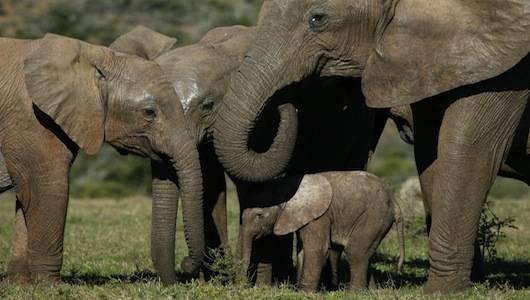 Stand 4 Elephants