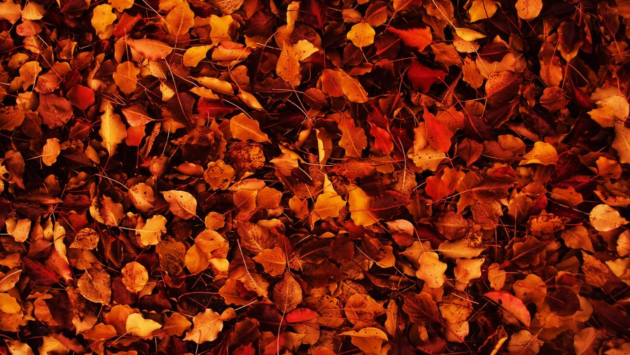 Falls For Autumn
