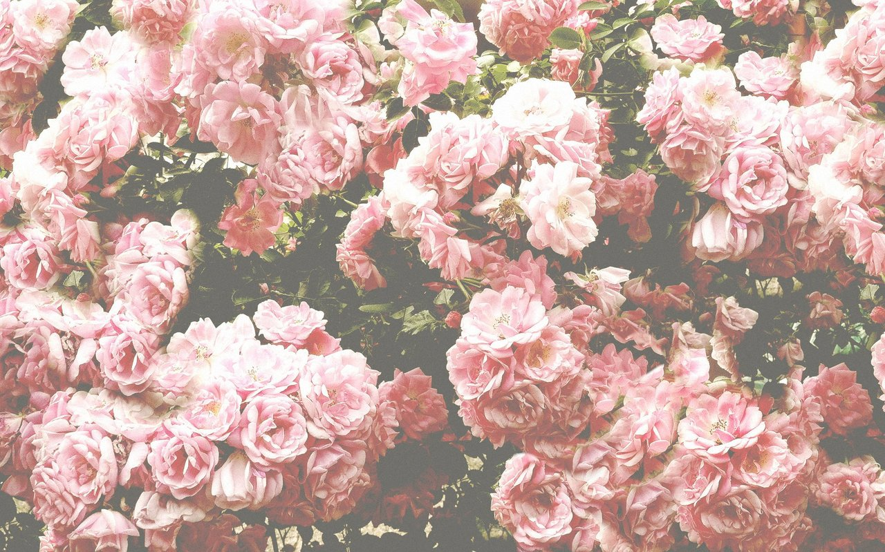 Pink Flowers Background Tumblr