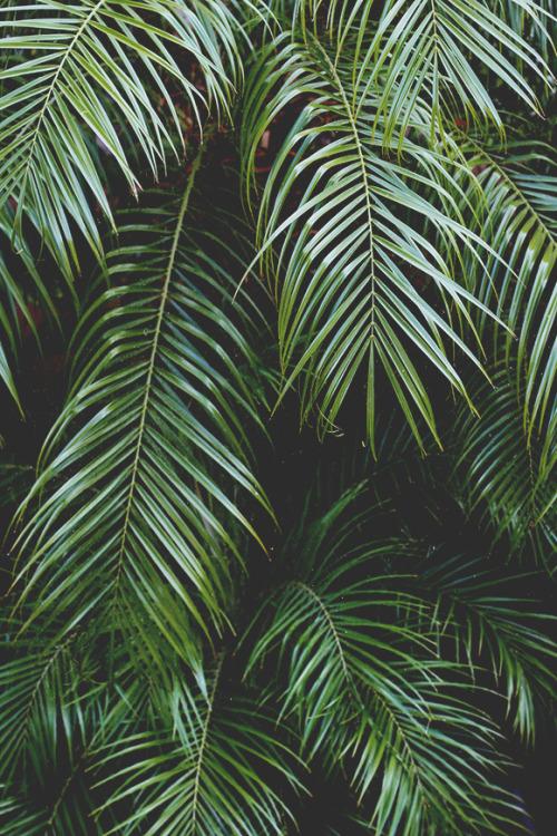 Imagini pentru tumblr tree