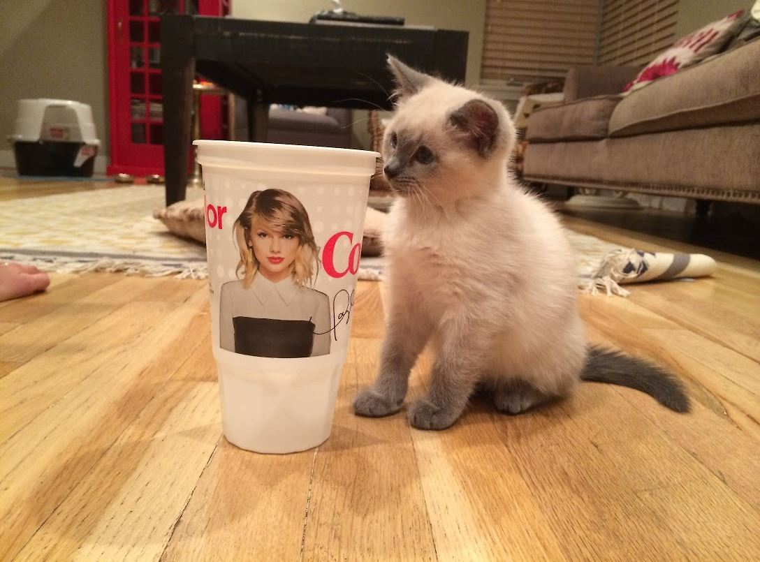 My Cats Name Is Taylor Swift