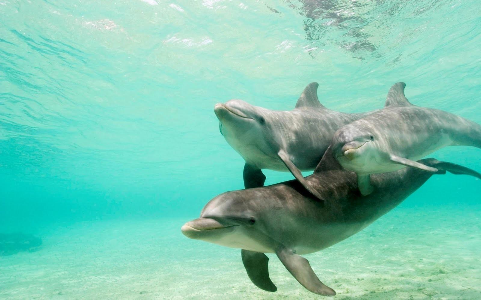 como son los delfines yahoo dating