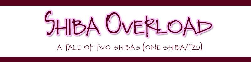 Adventures of Kirin & Kona: Shiba Overload