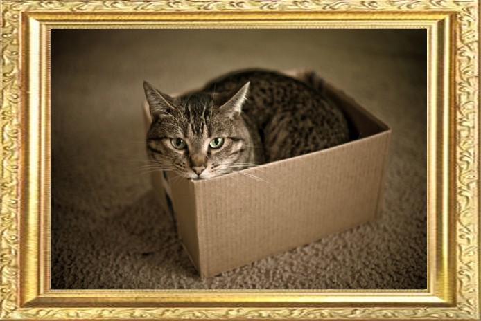 The cat is in the box