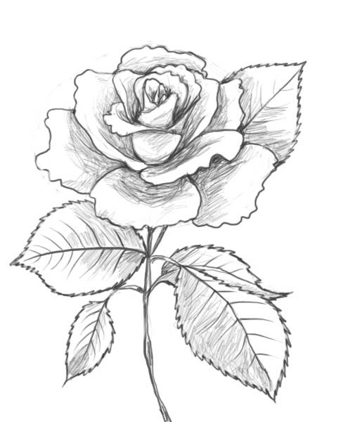 You are beautiful for Pretty rose drawings