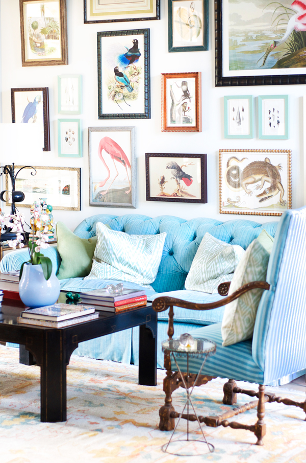 Tropical gallery wall with plush aqua velvet tufted sofa and antique blue on blue striped armchairs.