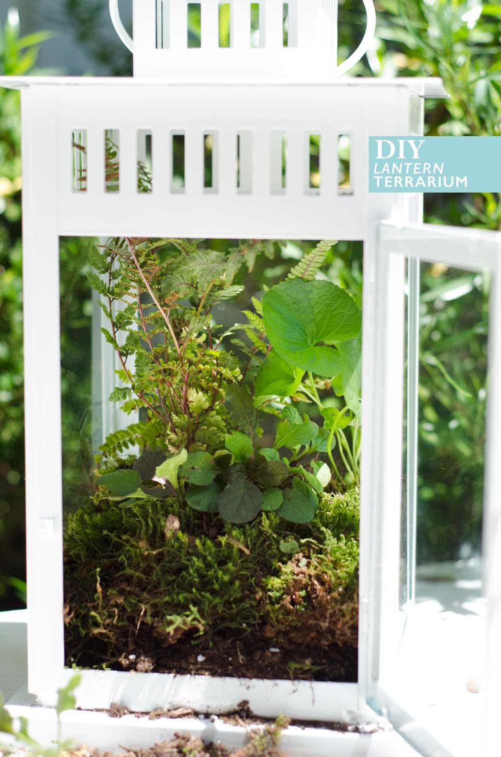 Ikea Hack: #DIY Lantern Terrarium on Thou Swell https://thouswell.com/