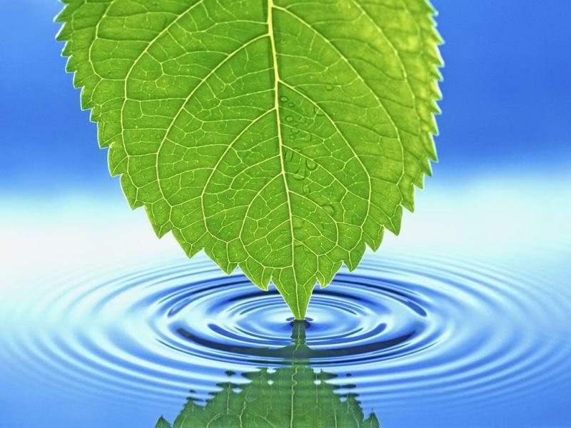 Обои Ripples для рабочего стола, 3D Вода и лист растения - Обои для рабочего стоала.