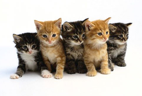 How To Train a Cats, Cat Training, Kitten Training