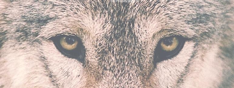 Wolf Life