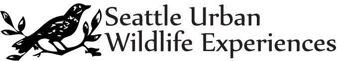 Seattle Urban Wildlife Experiences