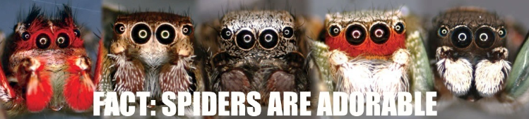 FACT: Spiders are Adorable