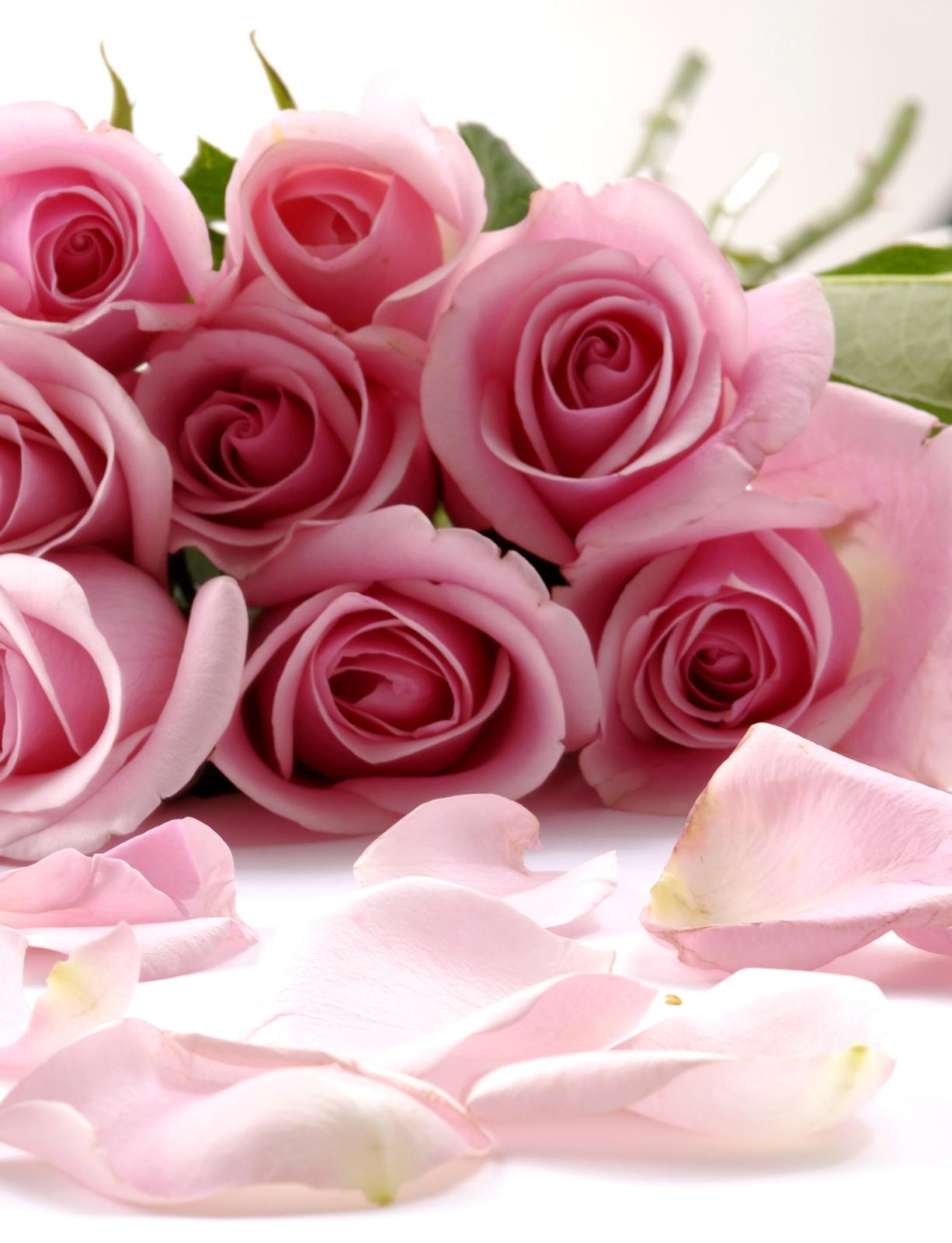 сайт знакомств без регистрации бесплатно в котласе на