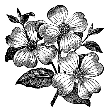 clip art flowers black and white. lack and white flower clipart