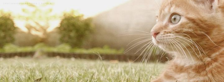 Capas para facebook: Gatos